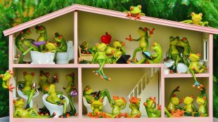 frogs-1382827_960_720